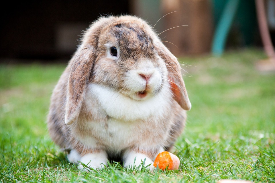 Vamos a conocer mejor a los conejos