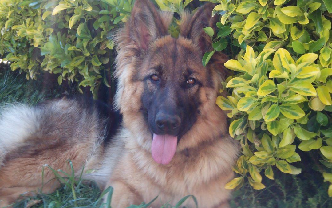 Mascota del mes: Trudi