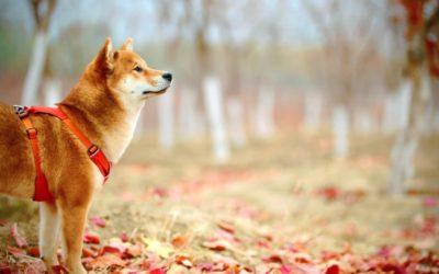Parásitos internos en tu perro
